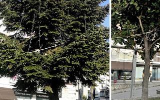 ΟΔΟΣ: εφημερίδα της Καστοριάς  | Πλατεία Δαβάκη, Χριστούγεννα-Πάσχα-15Αύγουστο