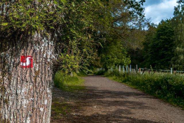 Erzquellweg - Mudersbach - Naturregion Sieg | Erlebnisweg Sieg | Natursteig-Sieg 06