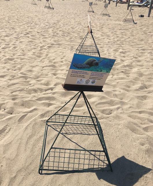 iztuzu plajı caretta caretta