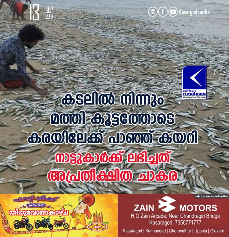 News, Kanhangad, Kerala, Fish
