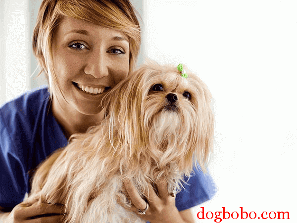 hookworms dogs diseases