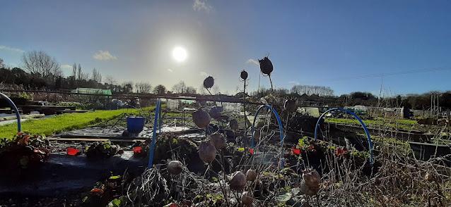 Winter sun over Hungerford allotment