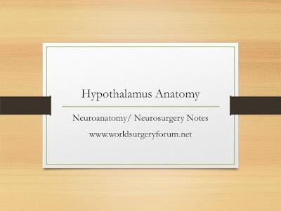 Hypothalamus Neuroanatomy/ Neurosurgery Notes