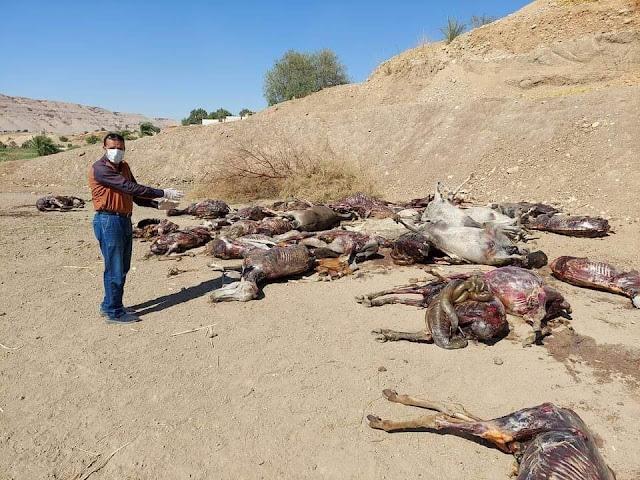 بالصور.. العثور على 30 حمارا مذبوحًا في إخميم بسوهاج