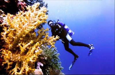 Pemandangan Bawah Laut Pulau owi
