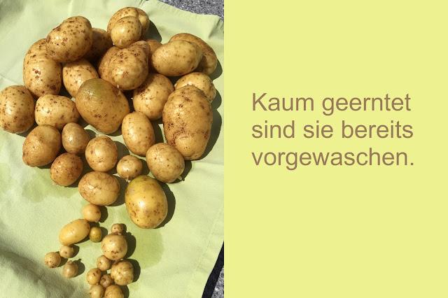 Vorgewaschene Kartoffeln