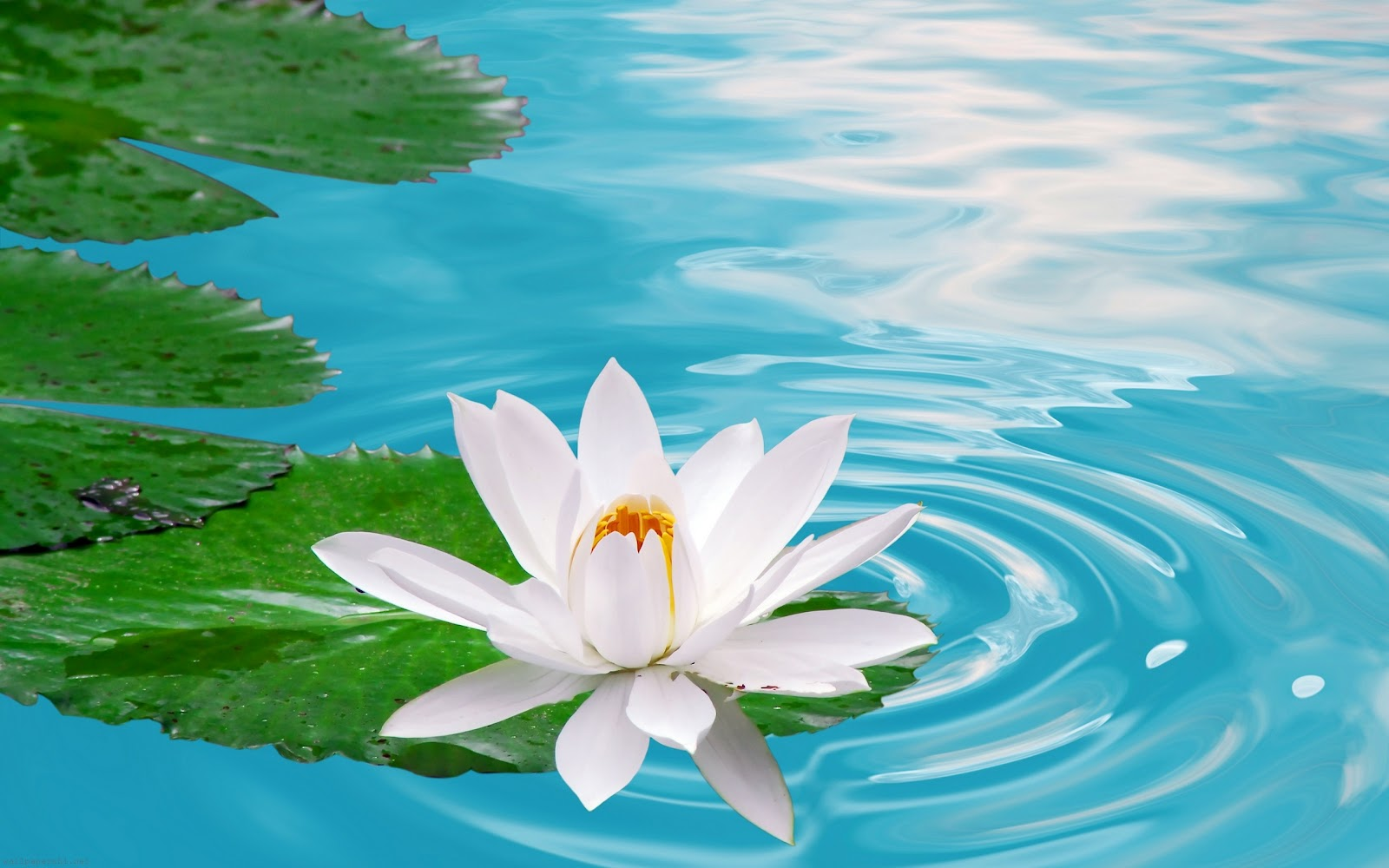 Funny Wallpapers: Beauty nature flower, beautiful nature ...  Images Of Nature And Flowers