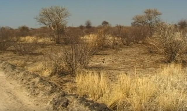 kalahari, salah satu bentang alam benua afrika