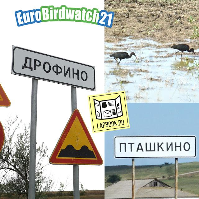 Поселки Крыма с названиями птиц