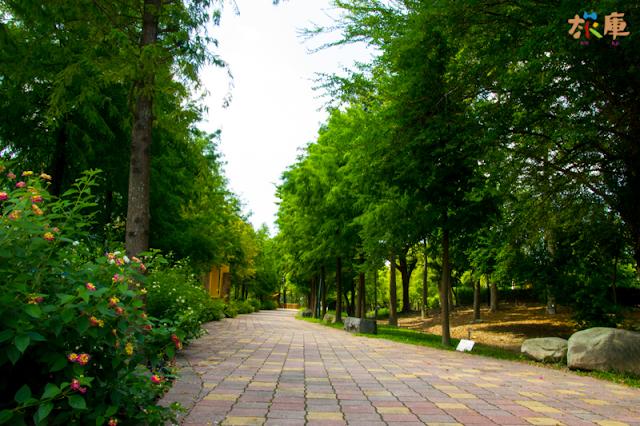 落羽松步道