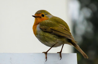 Some-Strange-Superstitions-That-Will-Make-You-Smile-Fingers-Crossed-image-of-a-robin