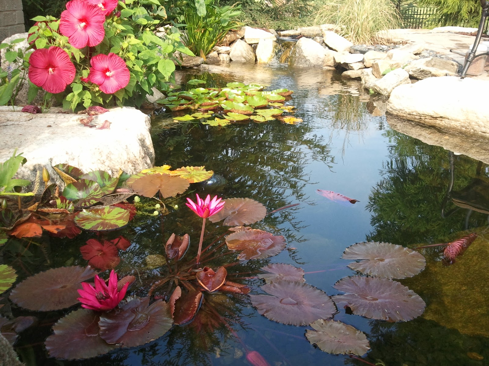 Pond Plants And Flowers