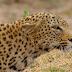 Love Nature aposta em proteção animal na grade de outubro