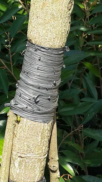 https://tipspetani.blogspot.com/2019/02/cara-membuat-bibit-durian-dengan-sistem.html