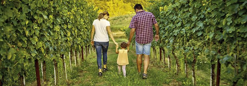 Wine Blog Roll - Il Blogger del Vino italiano: Il Verdicchio della Cantina  Andrea Felici di Leopardo Felici: terroir liquido!