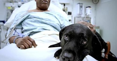 Пес-поводырь бросился под поезд, чтобы спасти своего слепого хозяина!