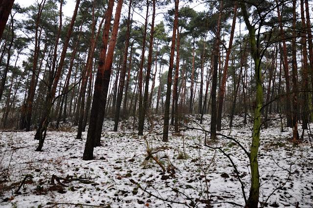 grodzisko wczesnośredniowieczne - wielka wieś/krąplewo
