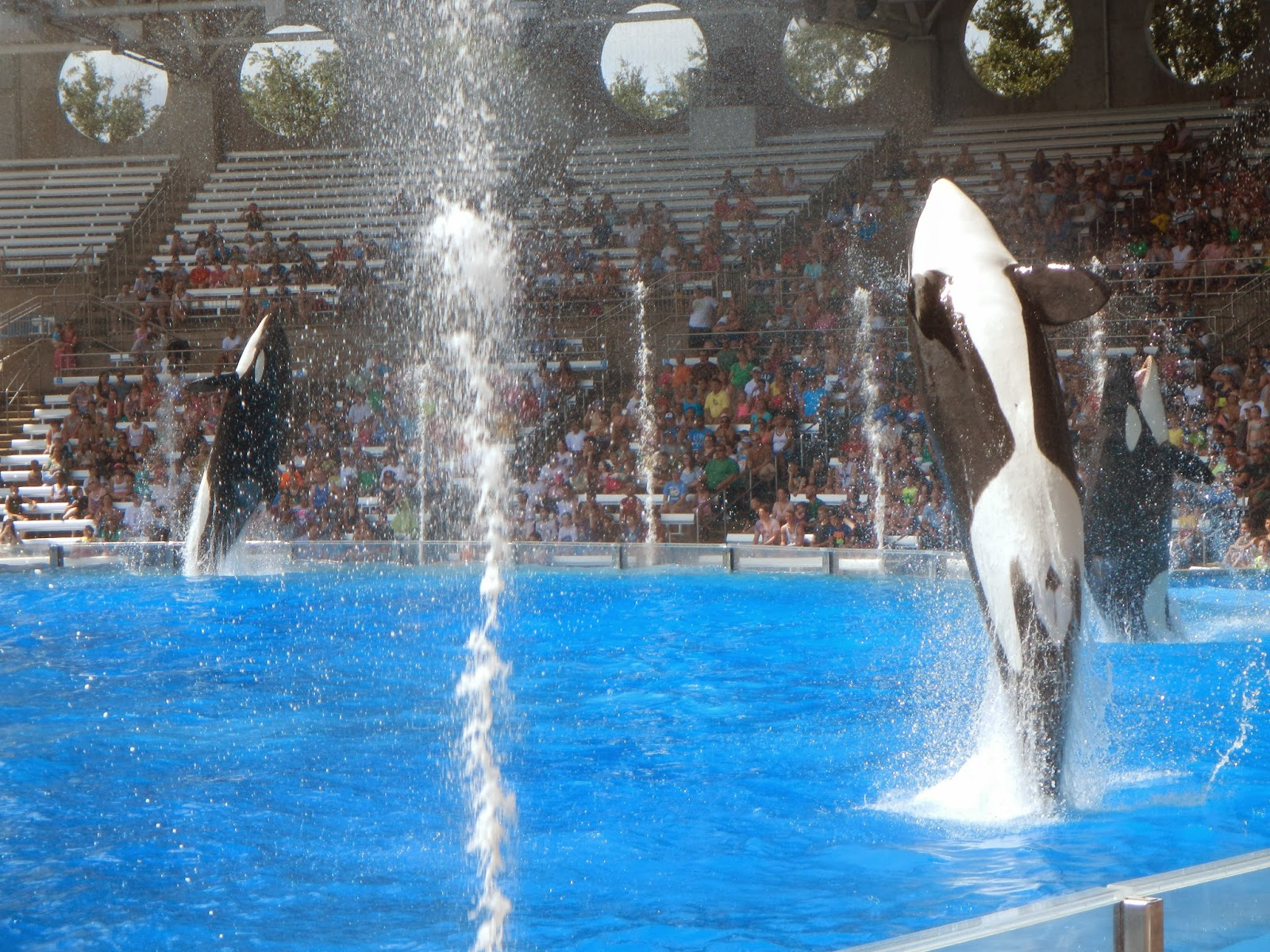 Incidents At Seaworld Parks: Forget Moi Knots: Blackfish