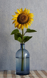 ورد, زهور, ورود, ازهار, صور ورد, صورة وردة