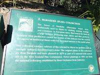 The Flax collection - Wellington Botanic Garden, New Zealand