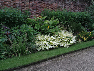 Stand out Hostas Tredegar House Green Fingered Blog