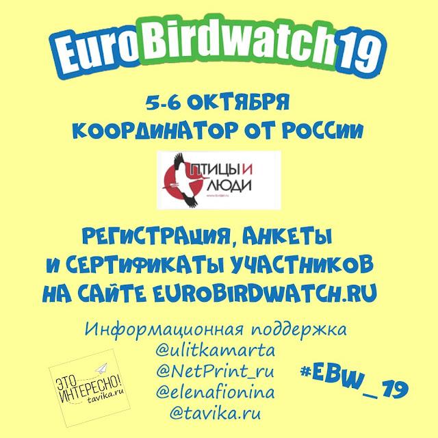 марафон в поддержку EuroBirdwatch 2019