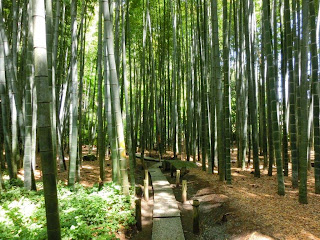 報国寺:竹の庭