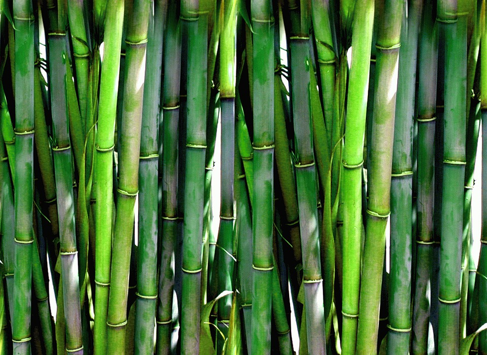 Kelebihan Dan Kekurangan Bambu sebagai Bahan Bangunan ...