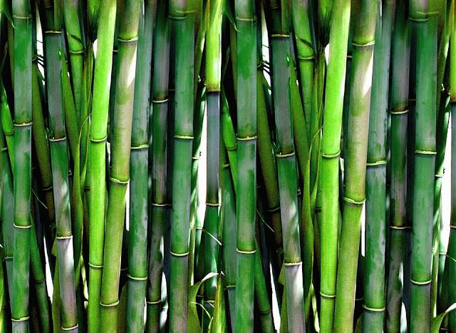 Kelebihan Dan Kekurangan Bambu sebagai Bahan Bangunan Ramah Lingkungan