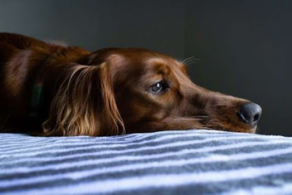 Tips for Entertaining Distressed Pets