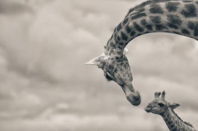 صور عميقة 2021 خلفيات جميلة جدا ذات معنى 17-best-wildlife-photography