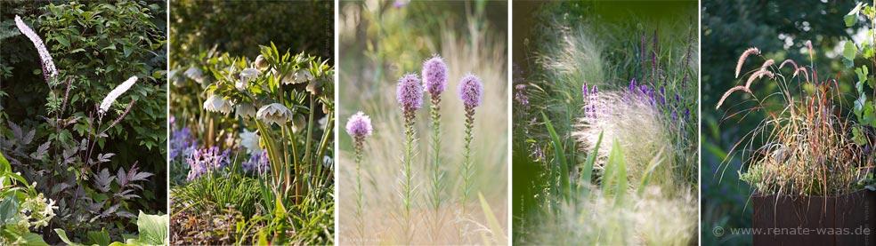 Blumenbeet mit Stauden und Gräsern, Blumenrabatten, Staudenbeete, Staudenbeet modern, moderne Bepflanzung für den Garten