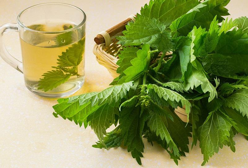 11 Benefícios Surpreendentes do Chá de Urtiga
