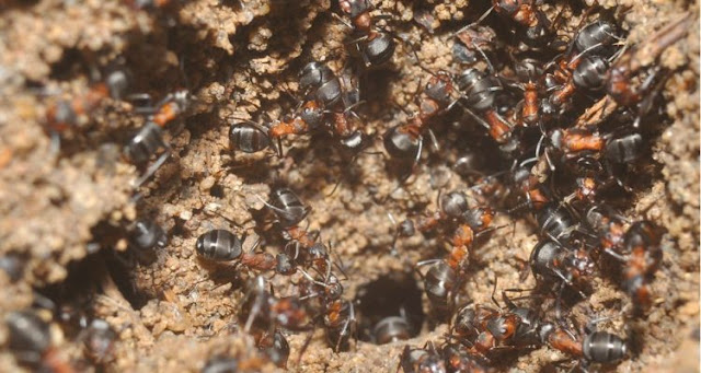 Ants trapped for years in a bunker survived in an absolutely terrible way