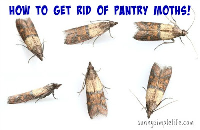 how to kill pantry moths