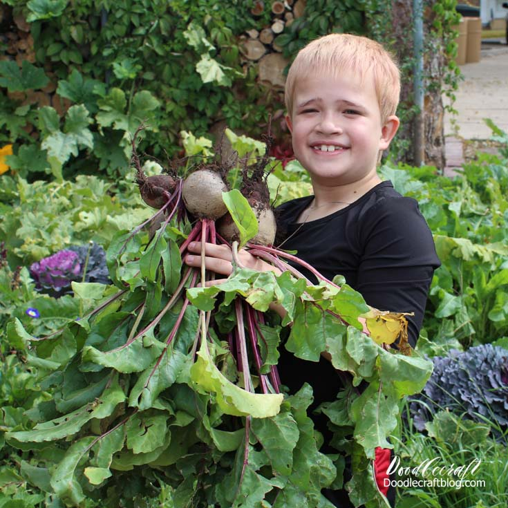 Adorable child holding a bunch of fresh beets in a lush and green environment.