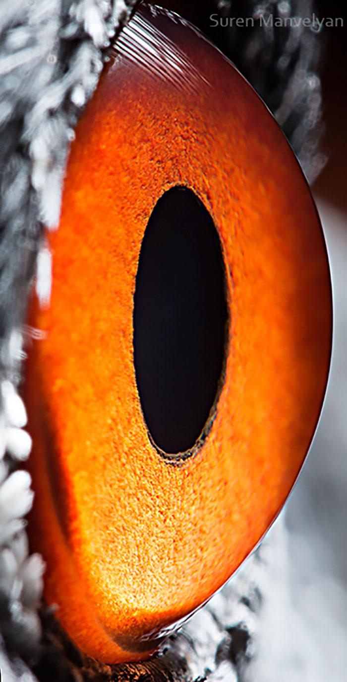 Crane Eyes Close Up Photograph