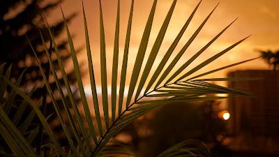 Palm Leaf Wallpaper At Sunset HD