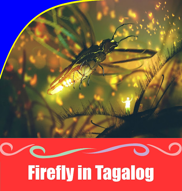 Firefly in Tagalog