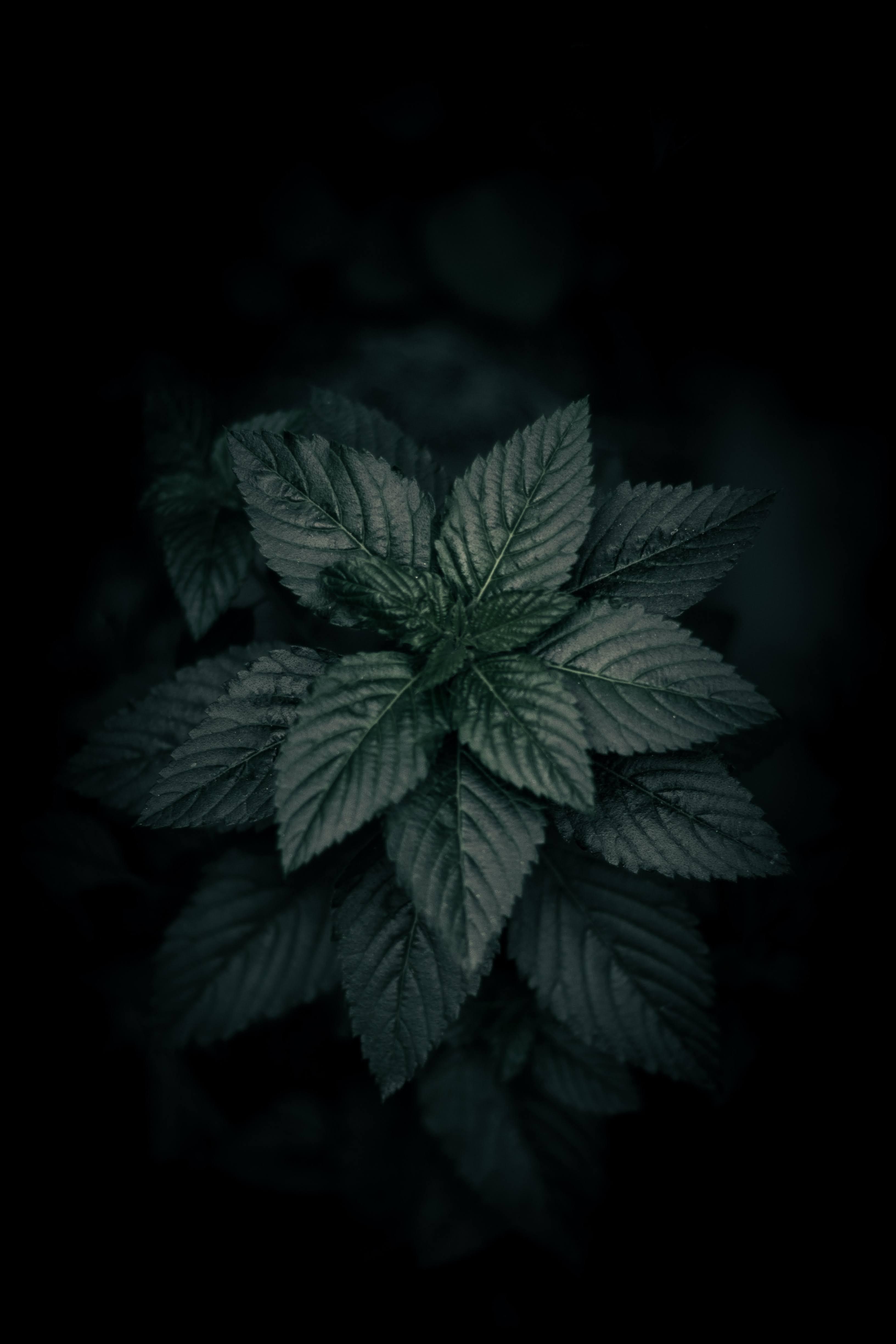 Green Plant with Black Background | Photo by Jacob Mejicanos via Unsplash
