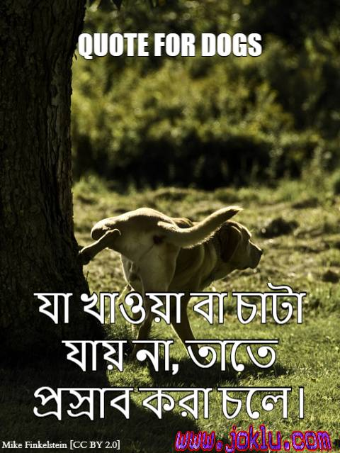 Funny quote for dogs Bengali funny picture