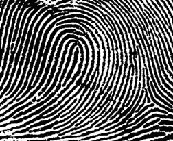 Loop Fingerprint Pattern
