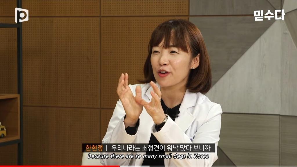 한국에만 슬개골 탈구 강아지가 많은 이유