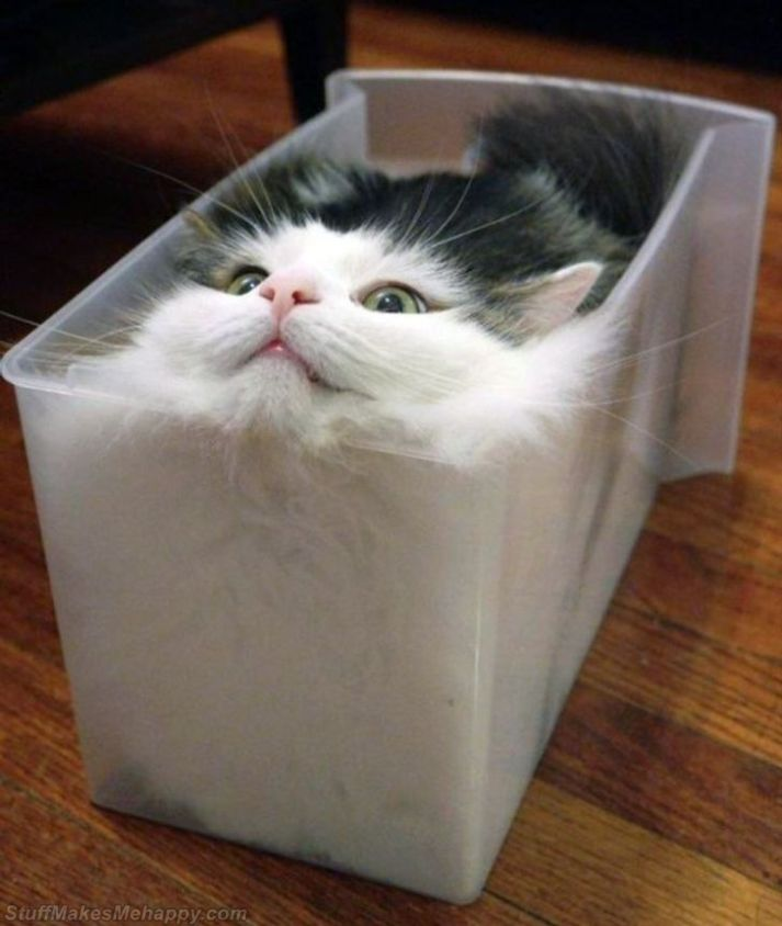 12 Flexible Cats That Have Proven They Can Fit Anywhere