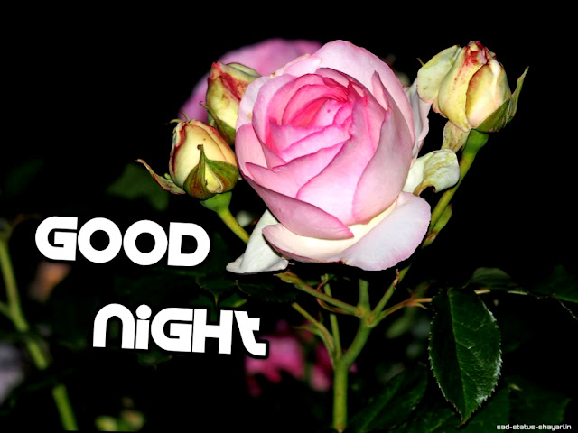Good night images of rose