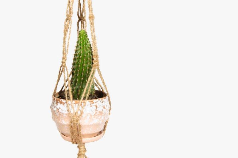cactus en macetero colgante de macrame