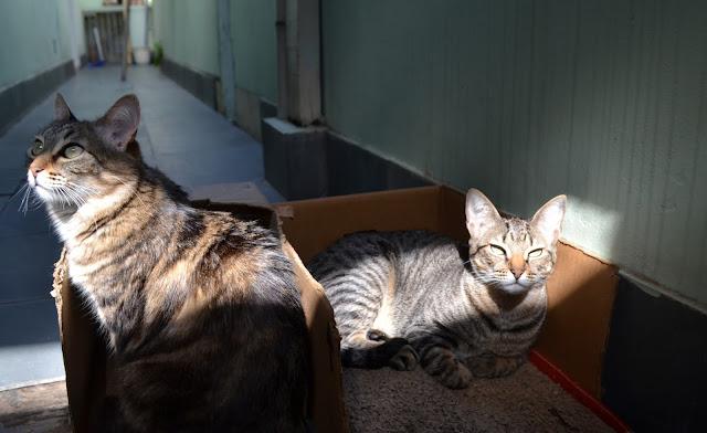 Minhas gatas, Poesia e Camomila em busca de um solzinho.