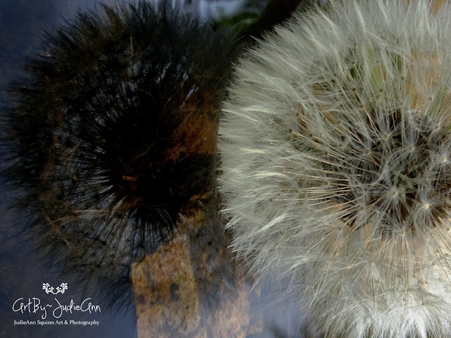 Dandelion On Stream