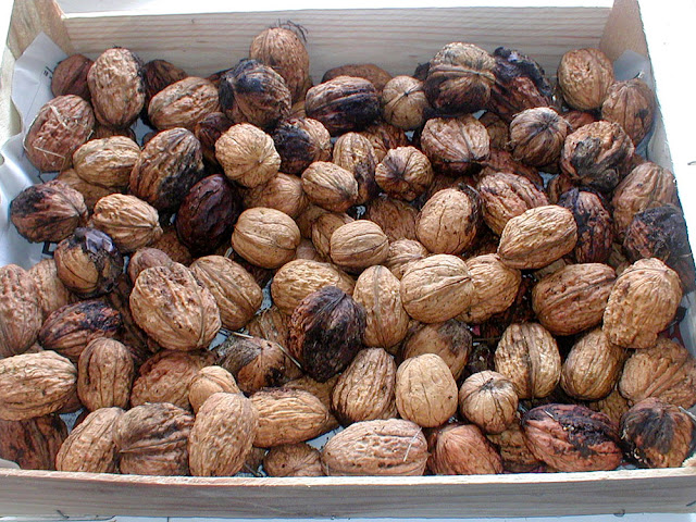 Homegrown walnuts. Photo by Loire Valley Time Travel.