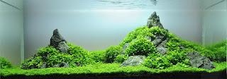 Membuat Aquascape Sendiri